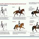 Formen på dressyrhästen